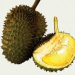 Amazing Durian Tour