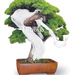 Pesta Bonsai Formosa