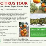JEJU CITRUS TOUR